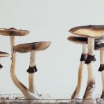 Legislation to Decriminalize Psilocybin Mushrooms on the Table in Denver