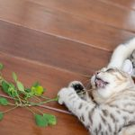 Catnip as a Bug Repellant