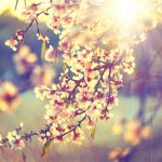 5 Steps to Reduce Springtime Allergy Symptoms Naturally