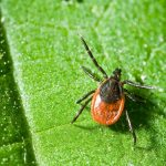 New Biomarkers for Lyme Disease Testing
