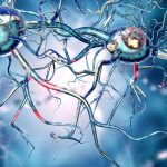 A Healthy Gut is Important to Preventing Neurodegenerative Disease