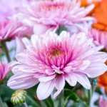 6 Wonderful Flowers With Medicinal Benefits