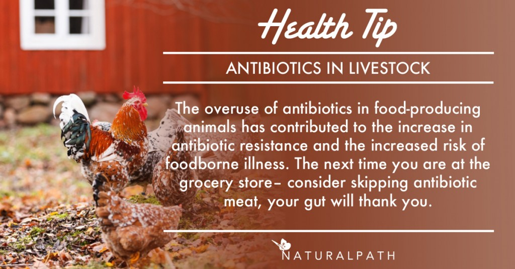 NP TIP antibiotics in livestock