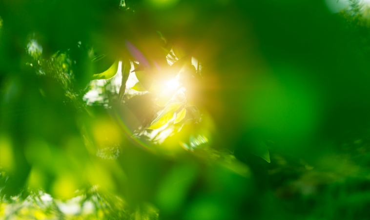 Low Vit D May Increase Risk of COVID-19 Infection