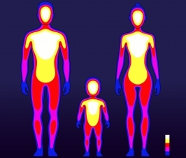 Regulation of Body Temp. May Also Help Regulate More Rapid Weight Loss