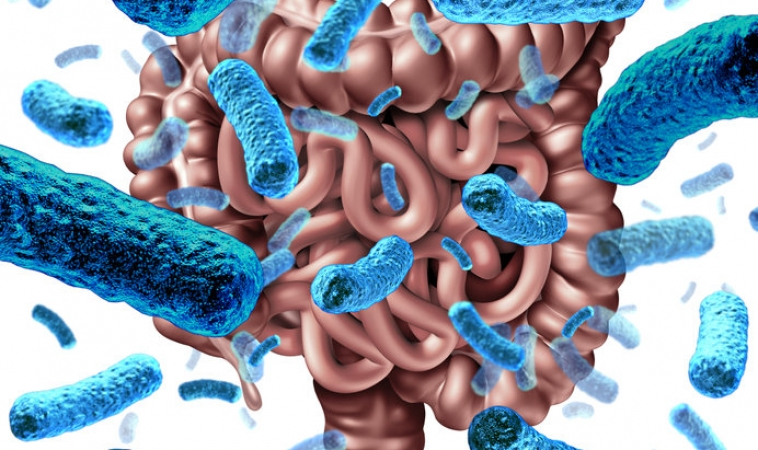 New Research on Genetic Link to Gut Bacteria