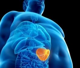 Obesity Lowers Immune Function as well as Increases Tumor Growth