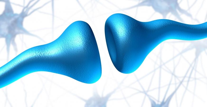 Serotonin's Link to Depression Severed