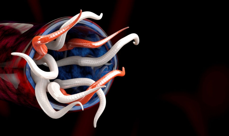 Using Parasitic Worms for Lowering Inflammation