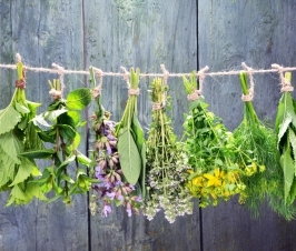 All Herbs Are Not Created Equal
