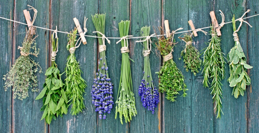 Herbs and Sunburns