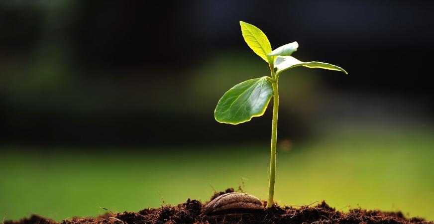 Plant Hormone Benefits Blood Sugar Control