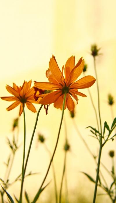 Why Choose Naturopathic Medicine?