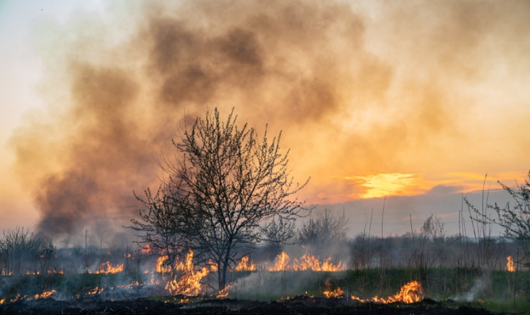 Wildfire Smoke Making COVID-19 Cases and Deaths Worse
