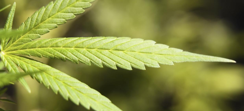 Marijuana Derivative Used to Treat Treatment-Resistant Seizures