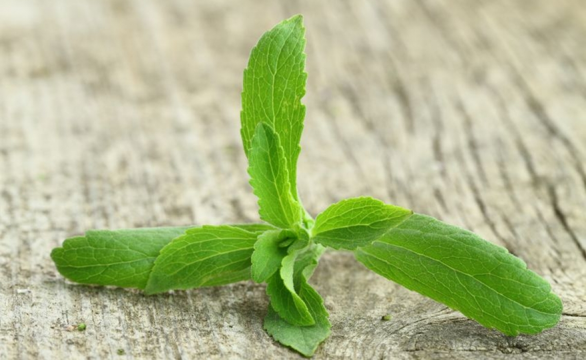 Stevia Performed Better than Antibiotics in Treatment of Lyme Disease