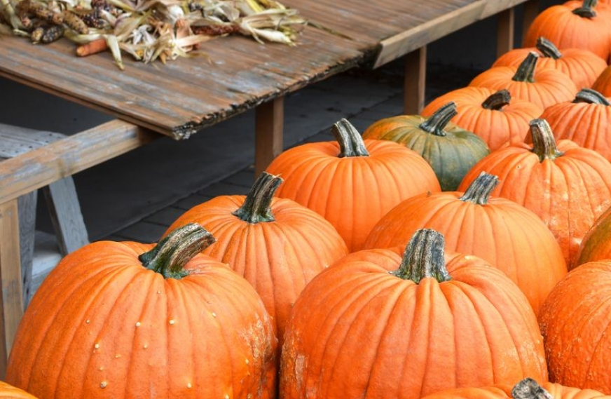 9 Benefits of Eating Pumpkin