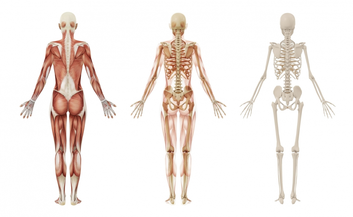 New Organ Discovered in Human Body?