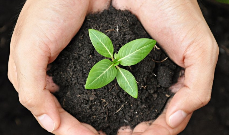 Using Probiotics to Clean up Contaminated Soil: Fortifying Trees