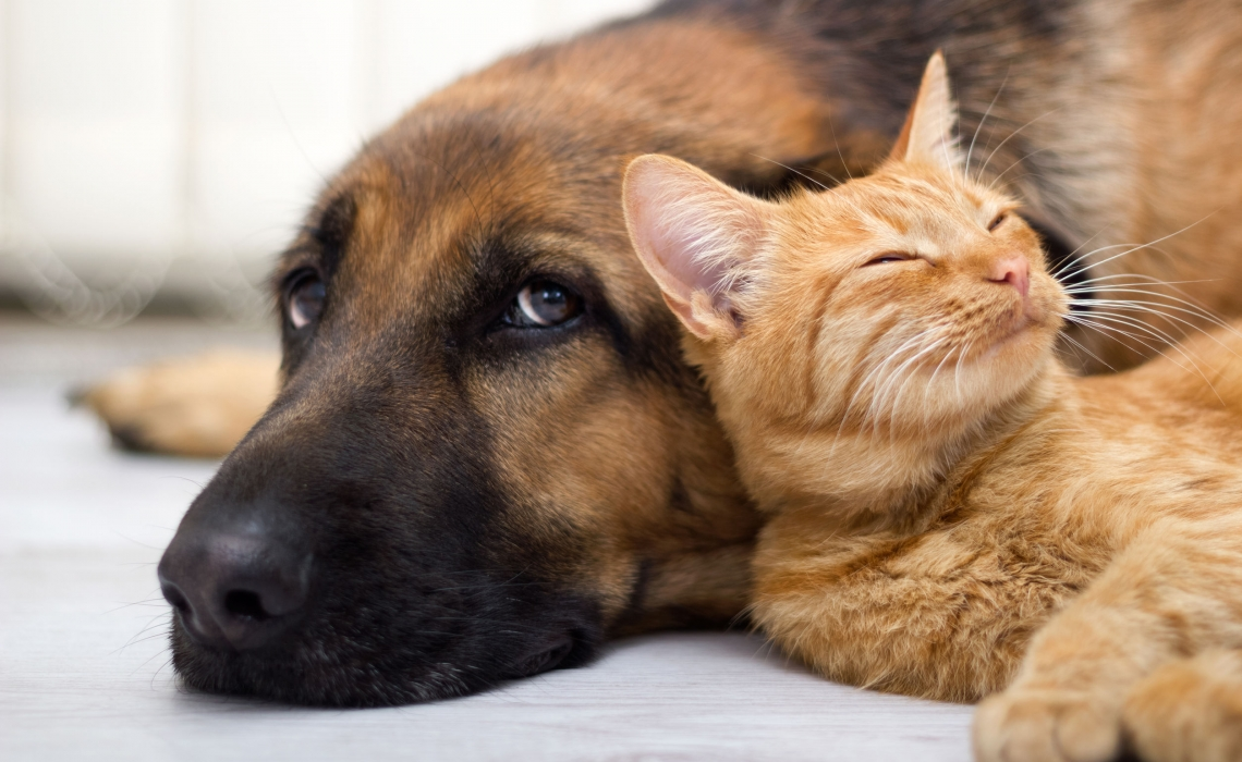 A Good Feeling about Gut Healing for Pets