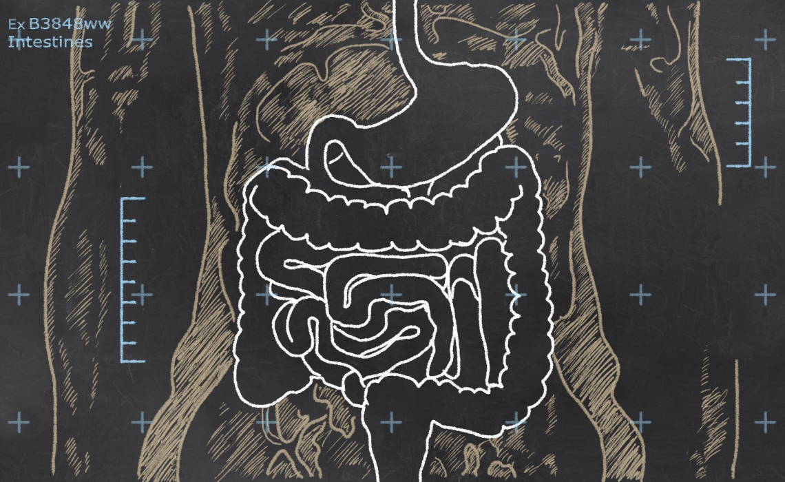 Addressing Leaky Gut in Autoimmune Diseases