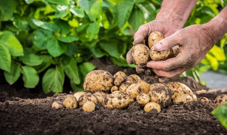 Organic Agriculture Key To Sustainable Food Source