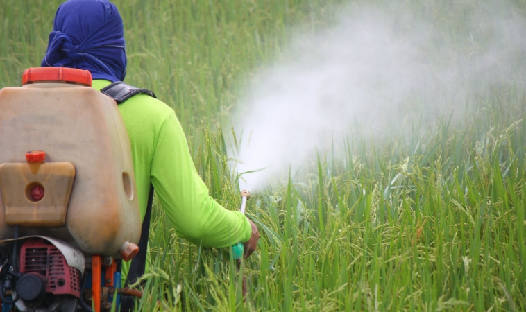 Pesticides As Bad As Cigarettes For Children's Lungs