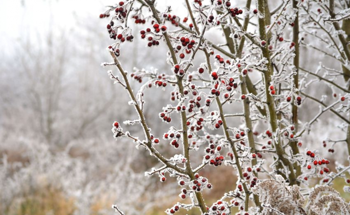 Winter is Coming: A Look at Hypothermia and Frost Bite