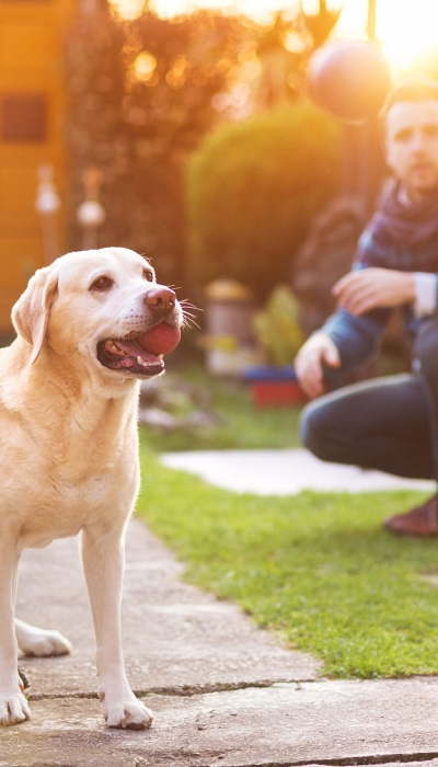 Dog Dementia: Therapies & New Cure Might Help Humans Too