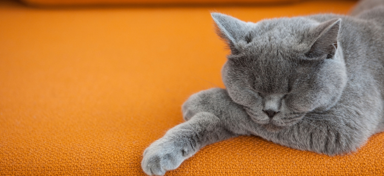 Short Naps May Help You Process Info
