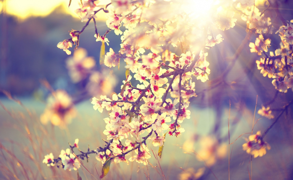 5 Steps to Reduce Springtime Allergy Symptoms Naturally