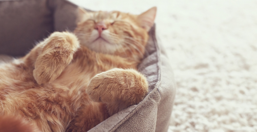 Why Does My Cat Vomit? A Holistic Perspective