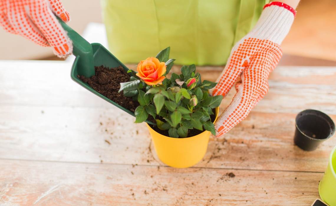 Gardening at Home is Great for Well-Being, Especially During a Pandemic