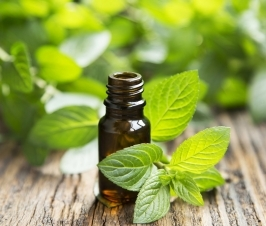 Herbs and Essential Oils for Coughs and Colds