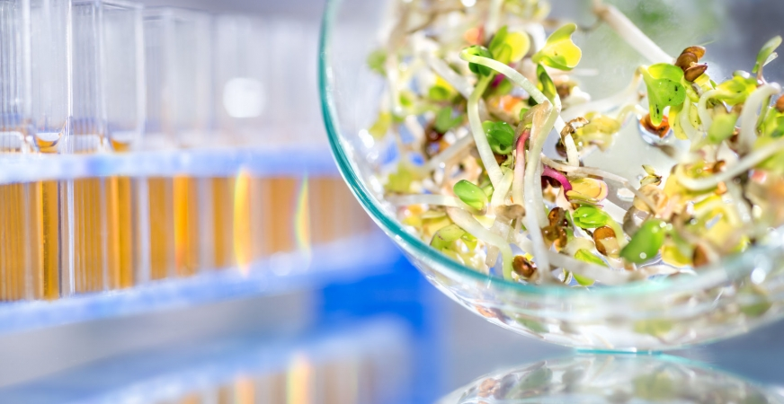 Information on Contaminated Raw Sprouts