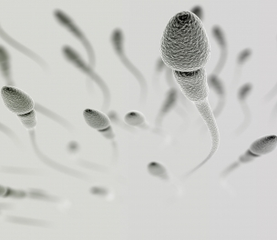 Dysfunctional Sperm Could be Related to Frequent Miscarriages