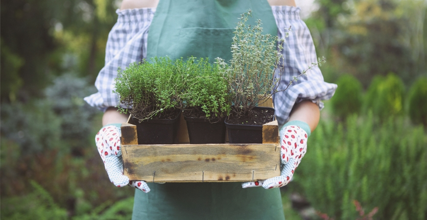 7 Health Benefits of Gardening