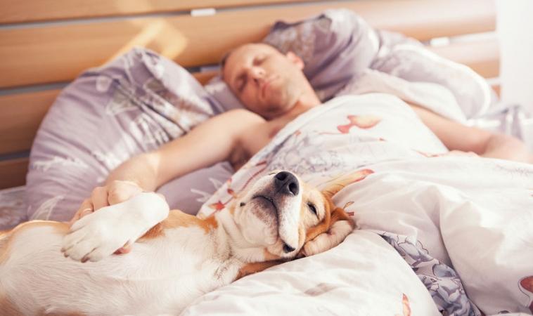 Sleep Helps Heal Traumatic Brain Injuries