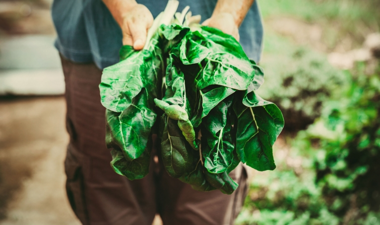 Leafy Greens May Help Maintain Muscle Strength and Mobility