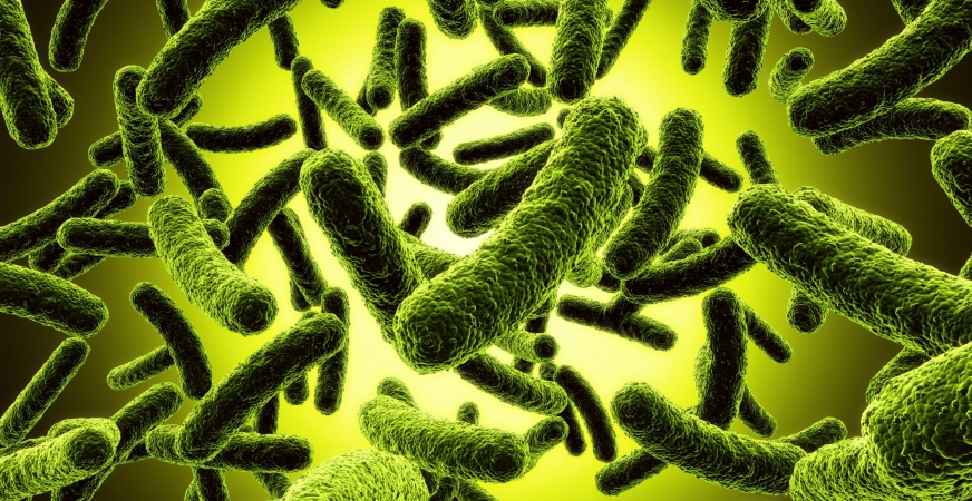 Gut Microbes Give Anticancer Treatments A Boost