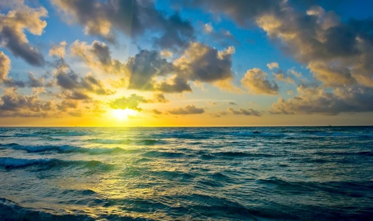 """Scientists Call to """"Save Our Oceans to Save Our Health"""""""