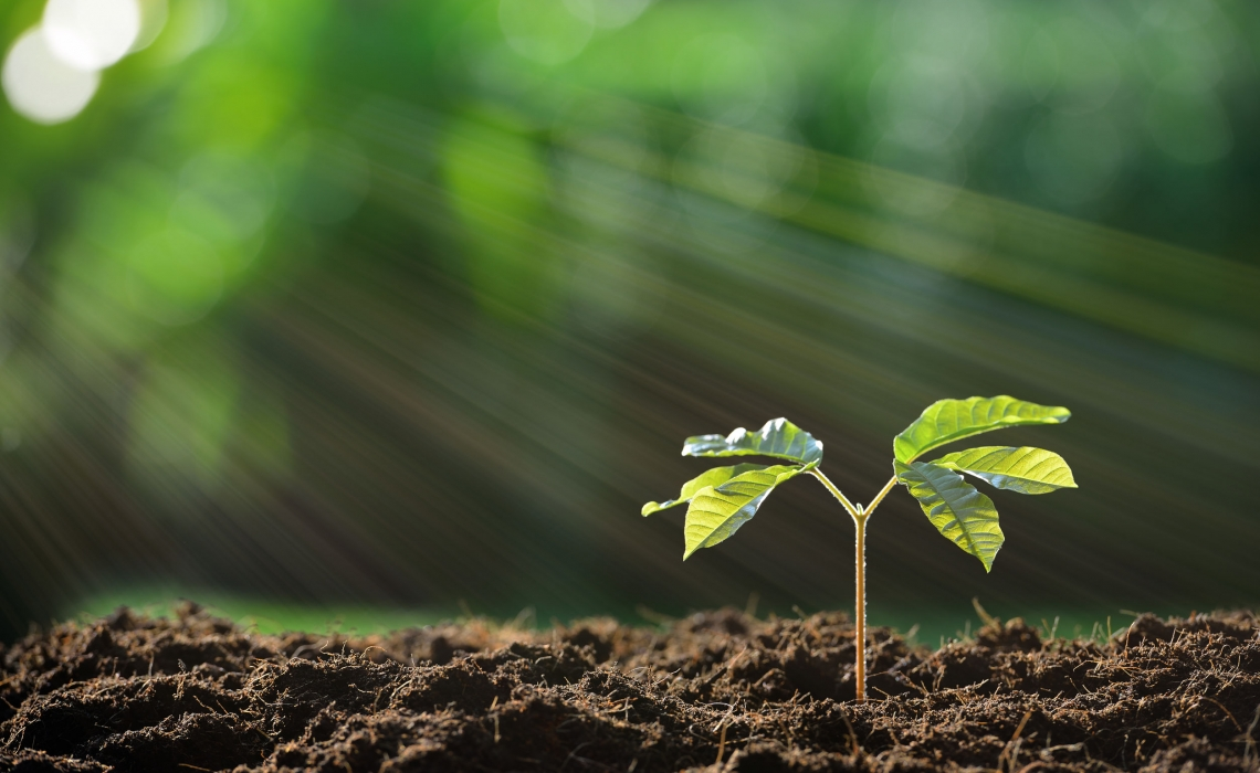 Microbiota Important for Plants to Get the Nutrients They Need, Too
