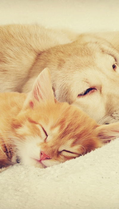 Why Your Pet's Diet Matters