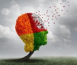 Brain Cell Lipid Balance Important Factor for Alzheimer's