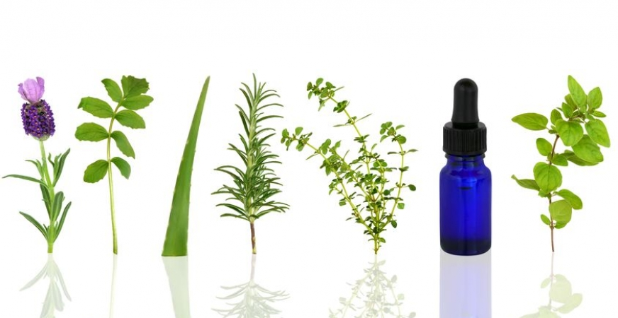 Oregano essential oil can fight Staphylococcus