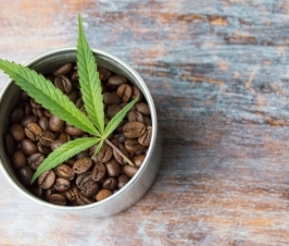 Connection Between Coffee and Cannabis?