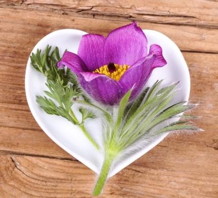 Pulsatilla: A Wonderful Remedy for the Sensitive Soul
