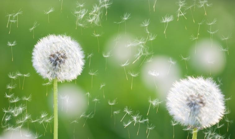 Are Food Sensitivities Aggravating Your Seasonal Allergies or Vice Versa?