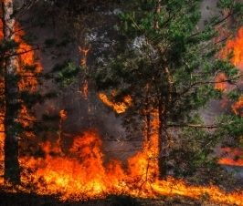 6 Ways to Minimize the Health Effects of Wildfire Smoke