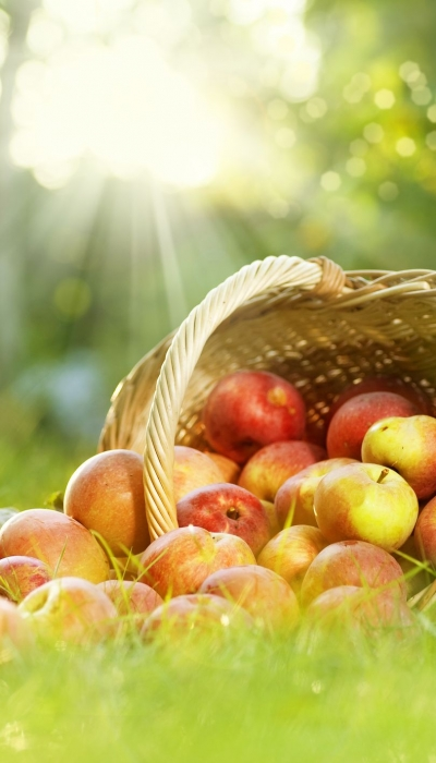 Children Who Regularly Eat Apple Less Likely to Become Obese